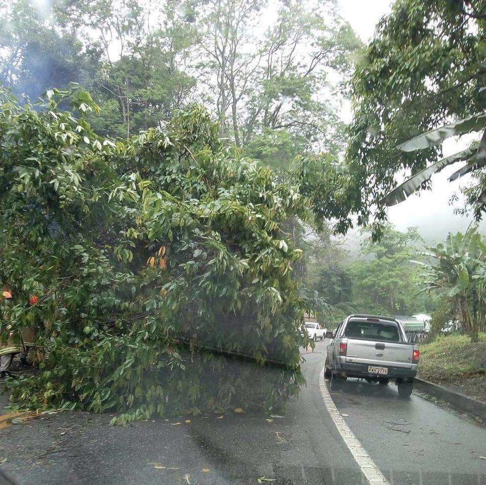 Árvore cai e interdita parte da BR-101 em Angra dos Reis