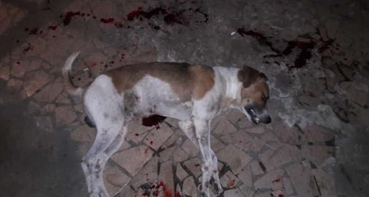 Morte do Cão: Sociedade Protetora dos Animais pedirá explicações à PM